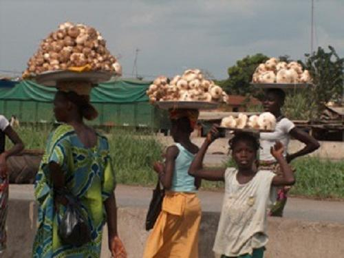 Women selling high quantities of Termitomyces sporophores.
