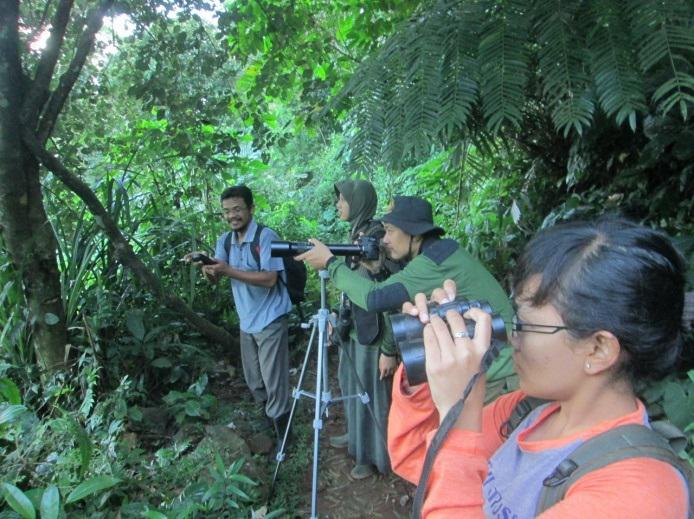 BKSDA staff and our team observing gibbon, in Linggoasri.