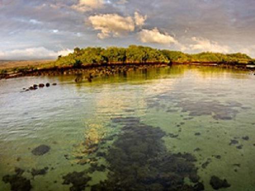 Mangroves serve as nursery areas for juvenile sharks.