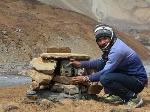 Gopal Khanal, deploying camera traps for snow leopard survey.