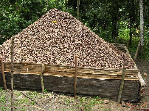 Brazil nut mountain.
