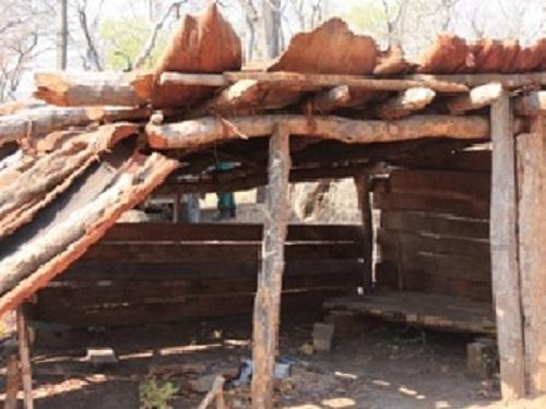 Illegal loggers' hut.