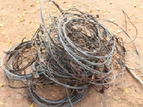Some of the wire snares encountered during the survey.