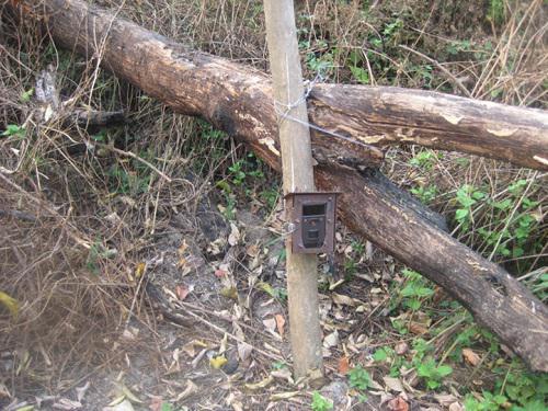 Camera traps in the field.