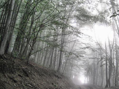 Carpathian beech forest.
