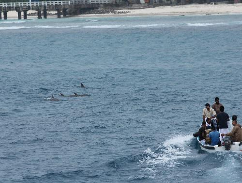 Bottlenose dolphin. Photo by Divya Panicker.