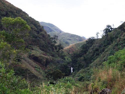 Degraded Forest Ampasimaneva.