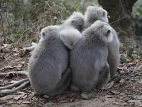 Huddling behaviour to cope with the harsh cold of winter.