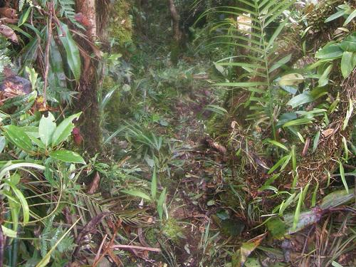Cloud forest on Mt Riu.
