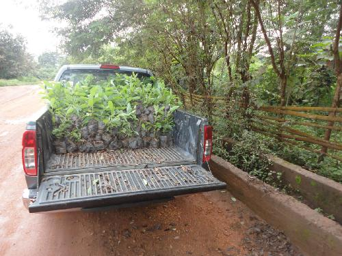 Seedlings being readied for transportation to the communities.