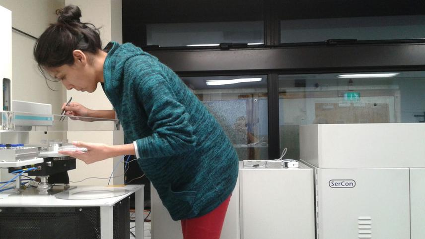 Sample sorting into the mass spectrometer for 18O stable isotopes analysis.