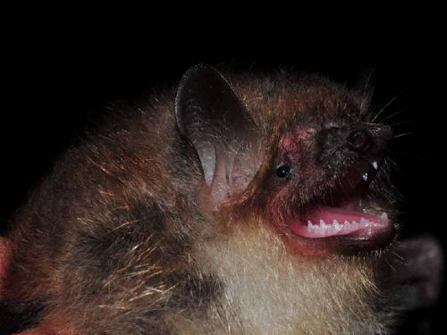 19715-B Bat.png