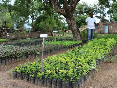 Tree nursery established in the village reached by the project.