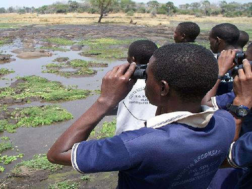 Youth observing Hippos during a day in the park.