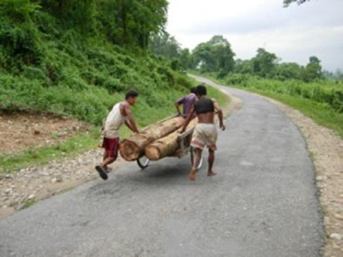 Timber logging.