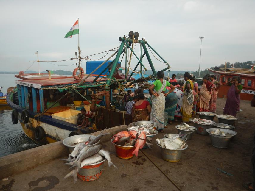 Fisher folk wait for fish catch caught from the trawlers. © Zoya Tyabji.