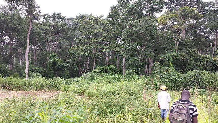 Ewè-Adakplamè Relic Forest.
