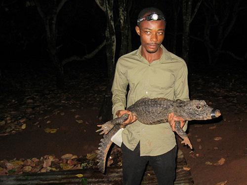 Emmanuel Amoah holding a West African dwarf crocodile.