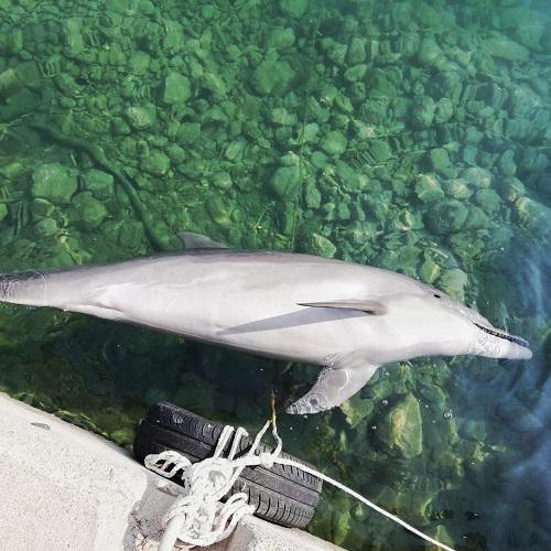 Denunciation call dolphin carcass.