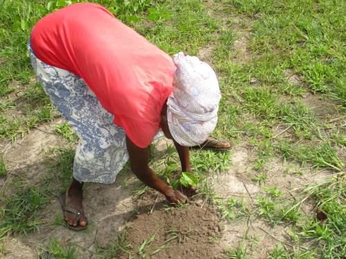 27594-2over 60 years woman planting mahogany seedlings at Klumasa.png