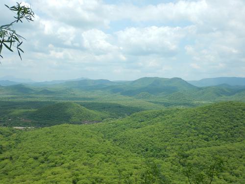 The Sierra de Alamos protected area near Sabinito Sur, Mexico.