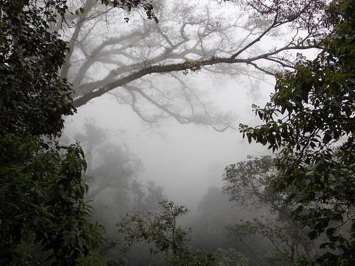 Mountain Cloud Forest, Jalisco. © Adilson Pinedo.