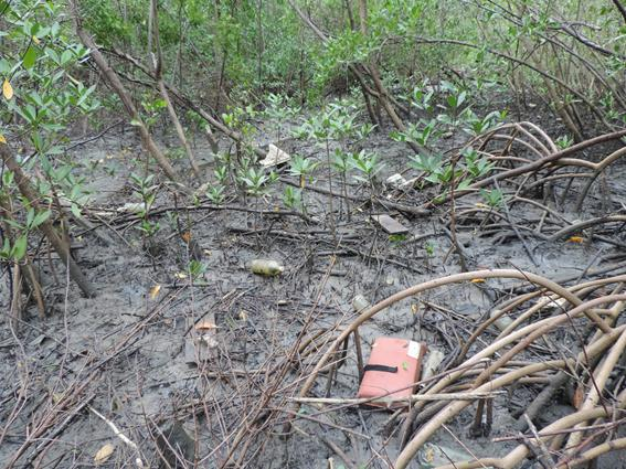 Anthropogenic waste in the mangrove forest of the Caeté River estuary, Ajuruteua Peninsula, Brazilian Amazon coast. © Dayene S Mendes