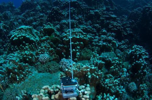 The GoPro camera deployed for the analysis of fish communities. © Alejandro Pérez-Matus