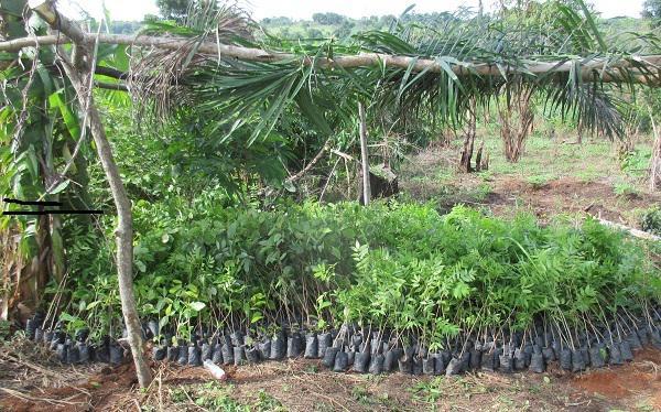 Assorted indigenous tree seedlings onsite for planting.