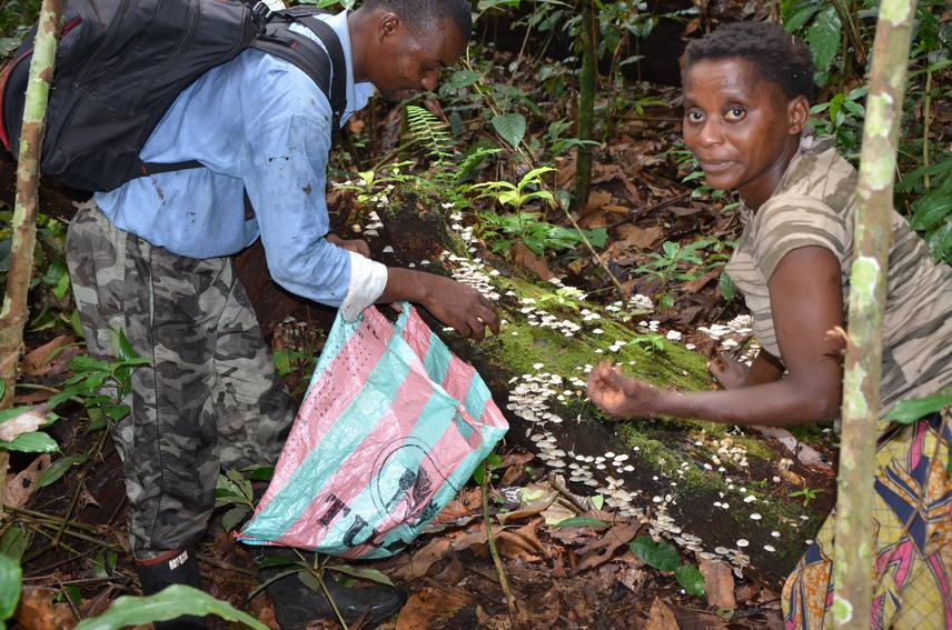 Sydney collecting wild edible mushrooms with a Germaine (Mbenzele woman), Makao, October2016. © Atikana Gallion.