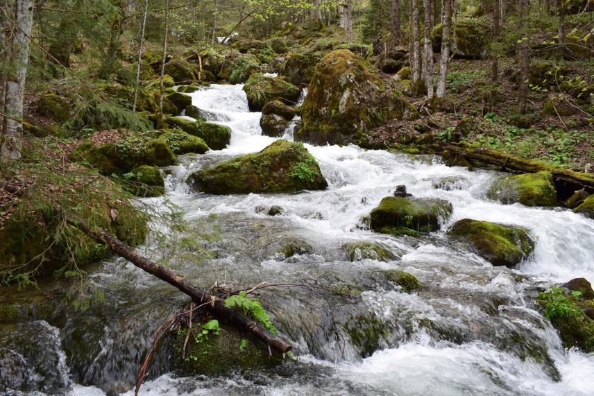 Jezernica, wild river on Vranica mountain in summer season (Mašić, 2019)