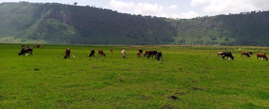 Overgrazing of wetland by animals and partial veiw of expansion of farmlands (Maze farming) into wetland.