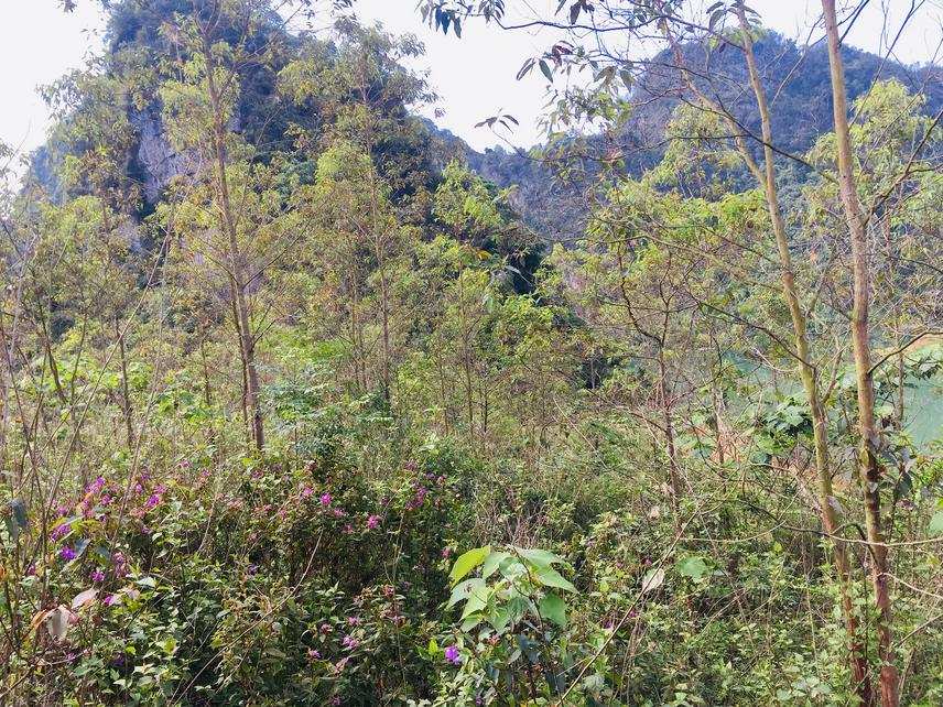 Plantation forests over limestone in Huu Lien Nature Reserve. © Bui Van Bac