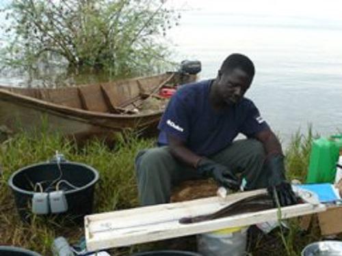 Mbalassa tagging Clarias specimens.