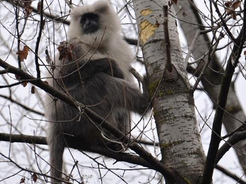 Feeding on bark during lean winter season.