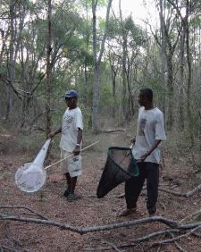 Sweep net training for Lepidoptera in Beza Mahafaly Special Reserve 2002.