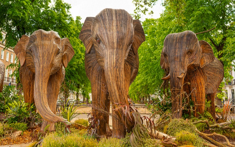 The Elephants Have Come to Town image